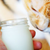 猫にも安心な「馬油」ってどんな製品?傷に塗ったり舐めても平気なの?