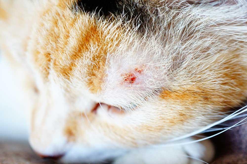 猫の傷に馬油を塗ってみた