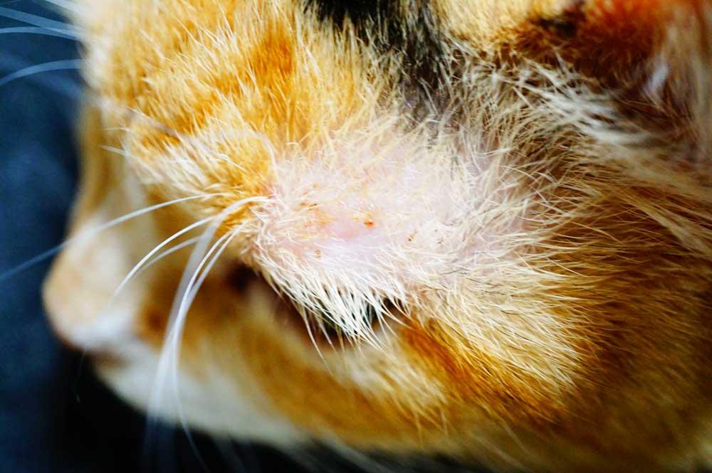 猫の傷 回復 馬油