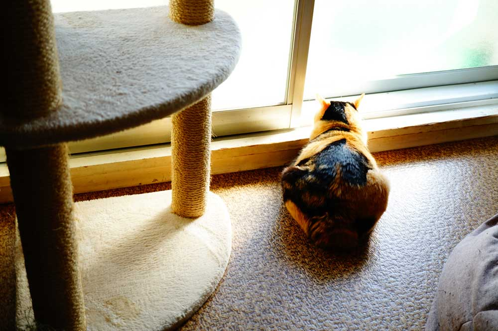 キャットタワーに興味がない猫