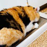 猫が爪をとぐのはこんな理由だった!ガリガリしたい猫の気持ちとは?