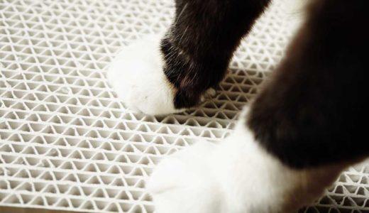 【ポイントは5つ】爪とぎを使ってくれない猫をしつける方法について