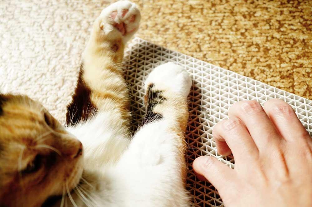 猫に爪とぎをしつける方法