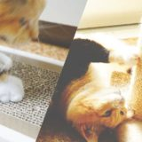 【最新】猫が気に入るおすすめ爪とぎは?通販で人気なのはこれだ!