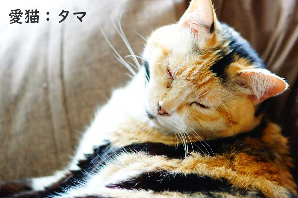 愛猫タマ 保護猫