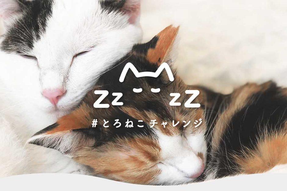 「#とろねこチャレンジ」で猫が救える!SNSに1投稿で10円寄付できるプロジェクト!