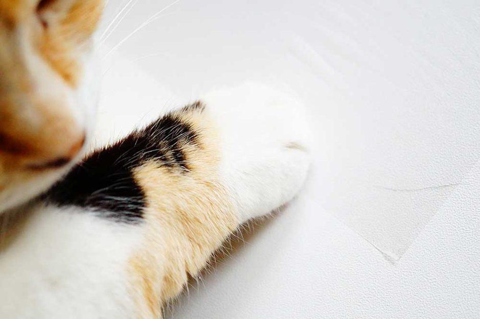 【猫】壁での爪とぎを防止する100均(ダイソー)の保護シートと他2つを比較してみた。