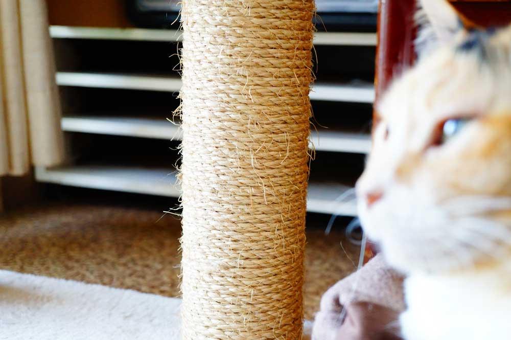 カスの出にくさ重視なら麻や綿の爪とぎを使ってみては?