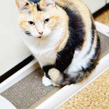 アイリスオーヤマの爪とぎをレビュー!うちの猫は研ぎ心地が最高らしい。