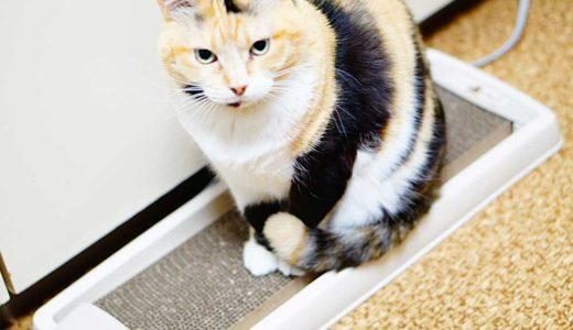 【レビュー】アイリスのダストレス爪とぎは老猫にピッタリかも!