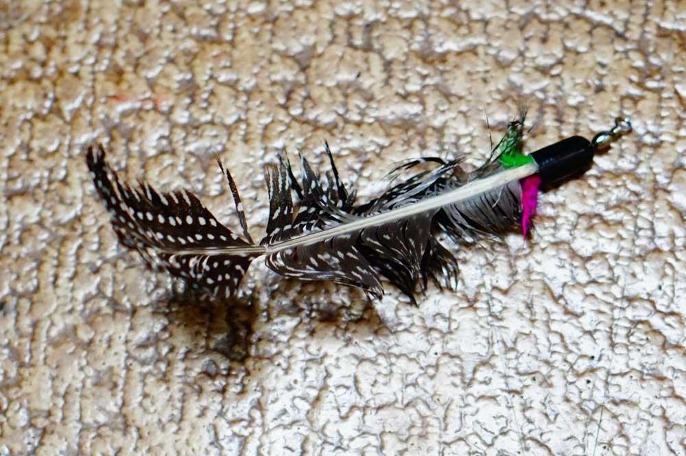 ボロボロの羽から新品に交換。タマの興味が10上がった↑