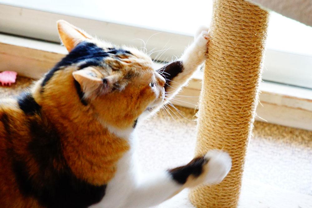 猫も好みはバラバラ!最適な爪とぎの選び方