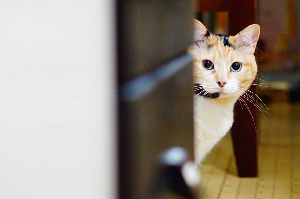 猫の性格は何で決まるのか?