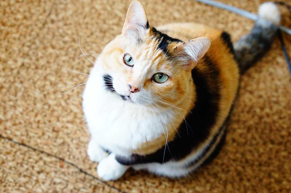 超甘えん坊な愛猫の性格