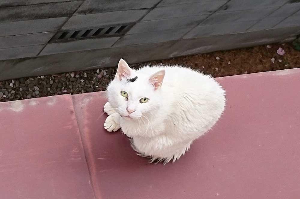 黒白猫の性格