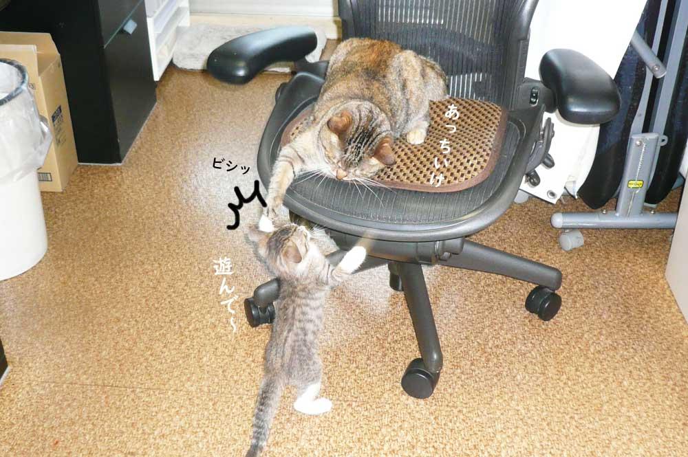 子猫から成猫になると性格も変わる