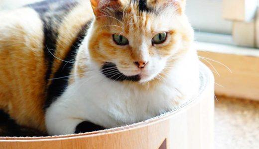 猫は丸い所が好き?何がそんなにイイんだろ?