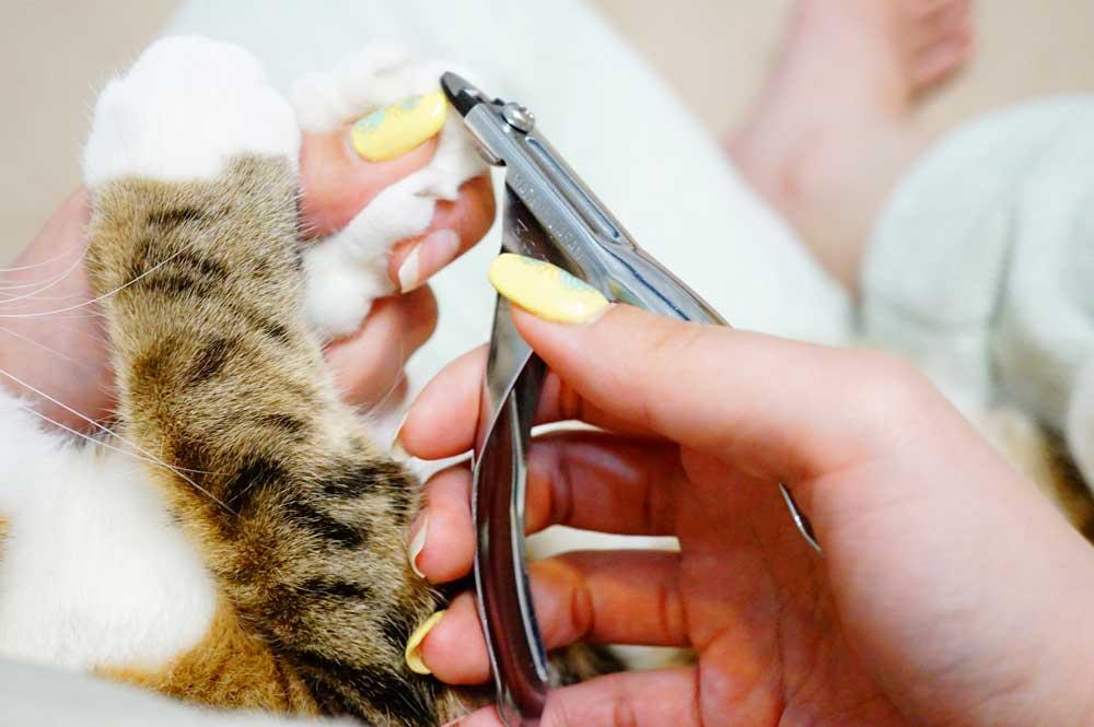 猫 爪切り 斬 ZAN ギロチン