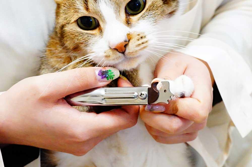 猫用爪切り「Zan」ピコックの特徴