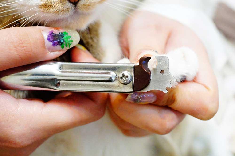 猫の爪切り 使いやすさ