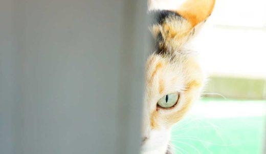 猫って敏感