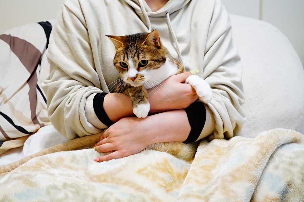 猫の爪切り タオル、毛布、洗濯ネットで包む