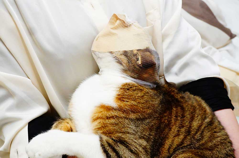 猫 爪切り 顔を隠すとおとなしくなる