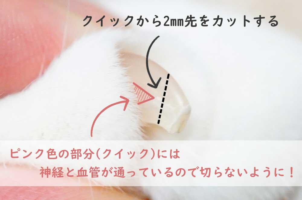 猫の爪 どこまで切る