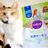 ハローキャットフードのデメリットは?評判や愛猫に食べさせた感想も紹介。