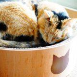 猫壱のバリバリボウルをレビュー!交換する前の裏面の使い方も紹介します。