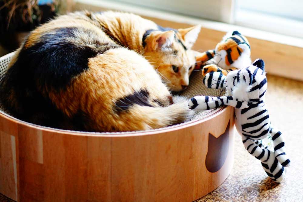 猫壱バリバリボウル 寝る