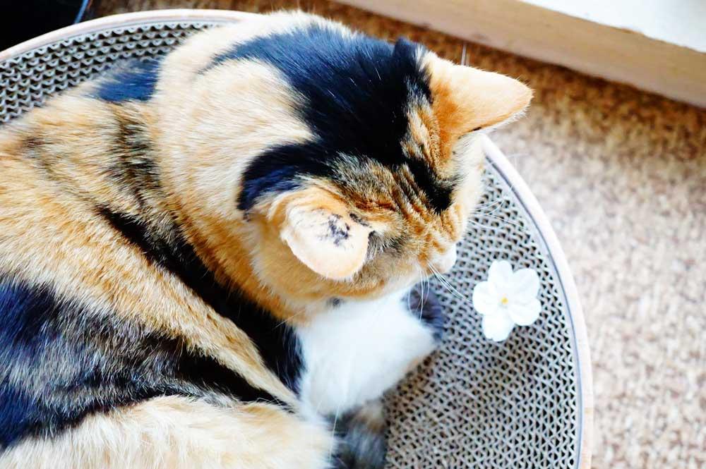 猫壱バリバリボウル
