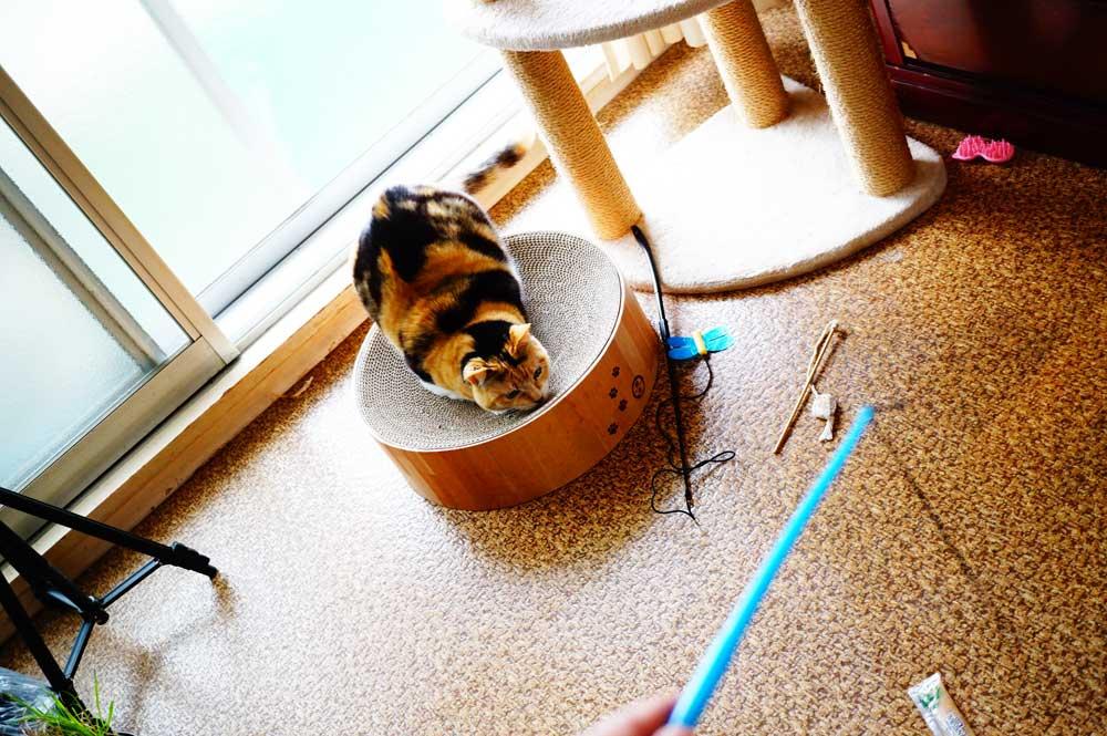 猫壱バリバリボウル 隠れる