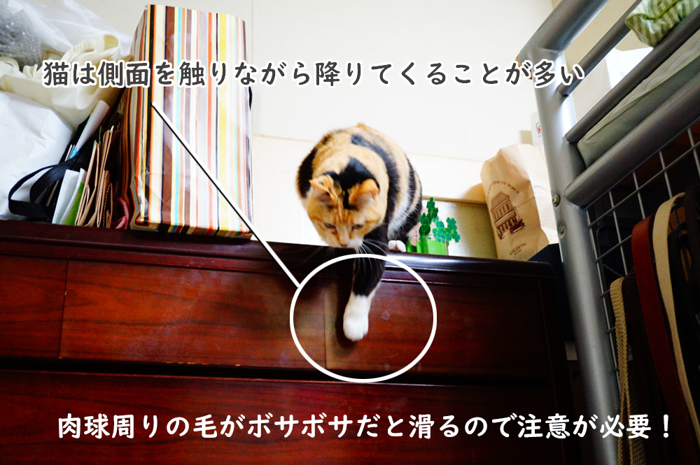 猫 飛び降りる 滑る