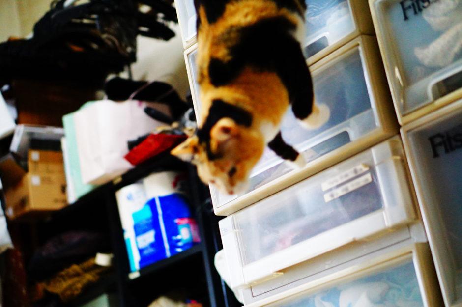 猫が飛び降りた時にドスンと音を立てて着地しても脚への負担はないのか?