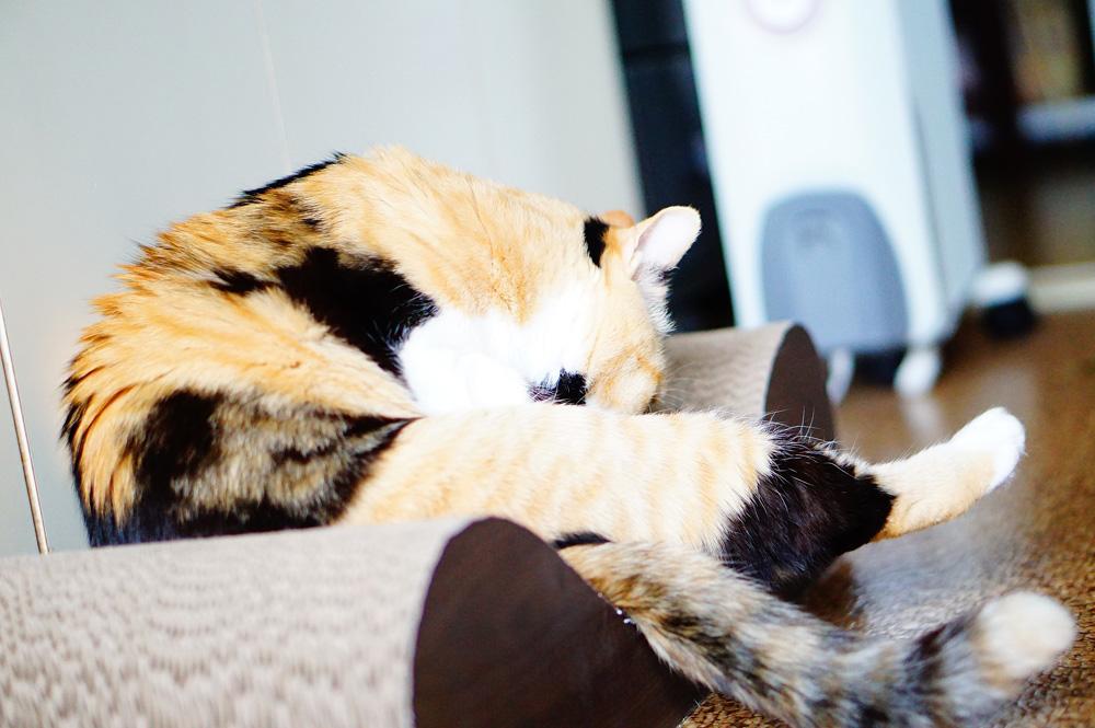 猫の足への負担を軽くしておいて損はなし!
