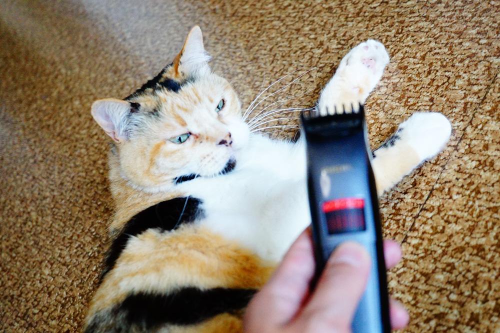猫の肉球からはみ出た毛をカット作戦を開始