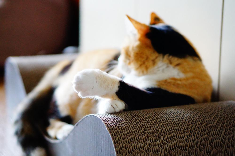 肉球を見せてくれない猫だと切るのが難しい