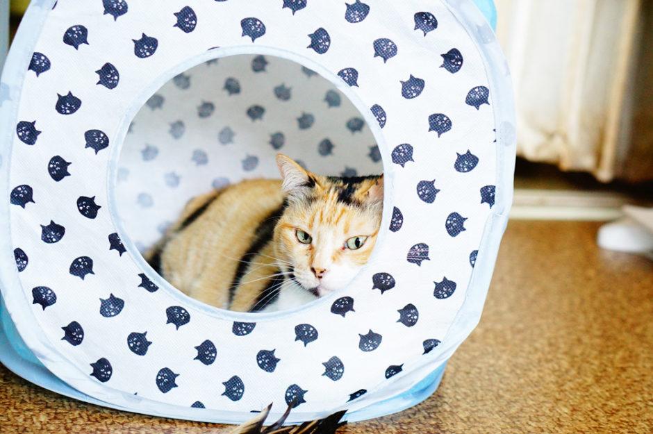 遊びがいっそう盛り上がる!キューブ型キャットテントで猫ウキウキ!