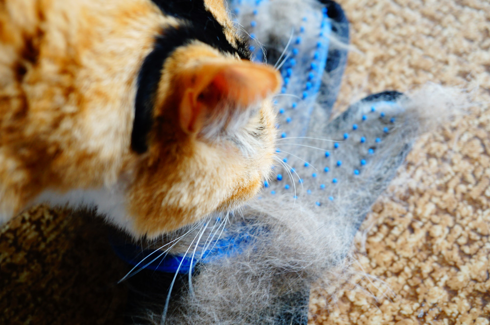 猫 グルーミング 手袋 裏 デメリット