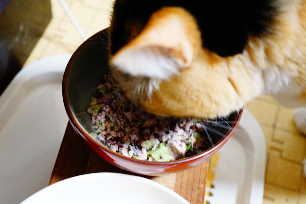 なまり節を猫に食べさせる事について