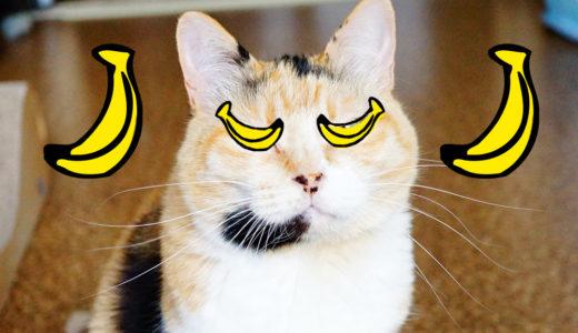 猫のウンチがコロコロで便秘気味だったけどバナナ型の快便に改善したお話