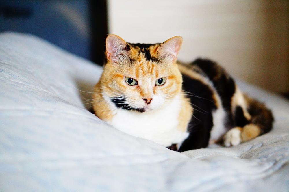 便秘が酷くなると猫はどうなる?