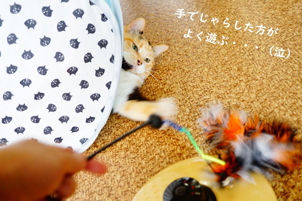 猫壱のキャッチミーイフユーキャン2