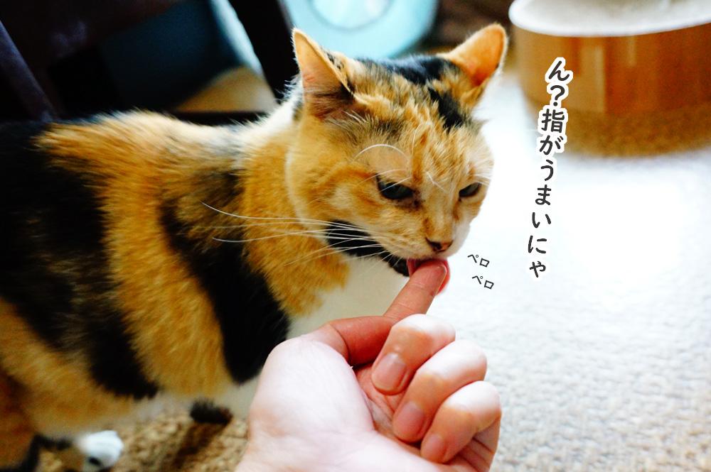 指にスープを付けて猫に舐めさせる
