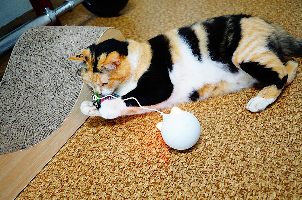 BENTOPAL(ベントパル) 猫用おもちゃ BENTOPAL P02 AUTOMATIC CAT TOY レビュー
