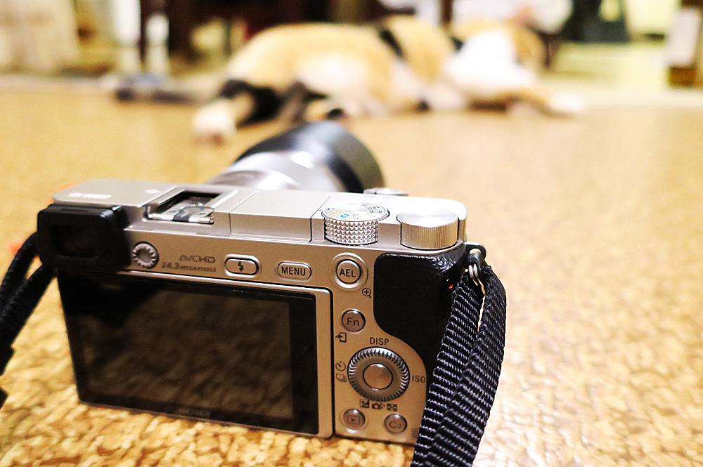カメラの性能による瞳の撮れ方の違い