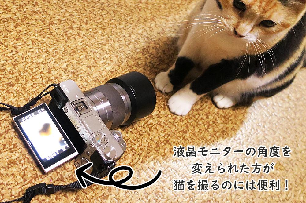 猫の撮影におすすめなミラーレスカメラ