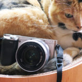 猫の撮影ならミラーレスカメラがおすすめ!一眼じゃなくても凄く綺麗に撮れるよ。