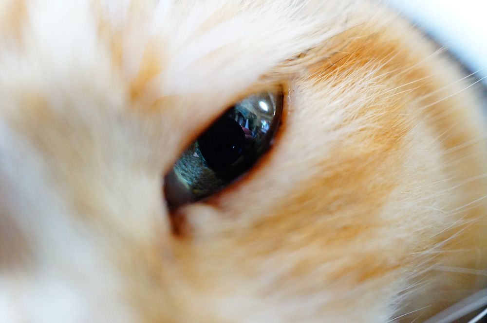 猫 ミラーレスカメラ 撮影